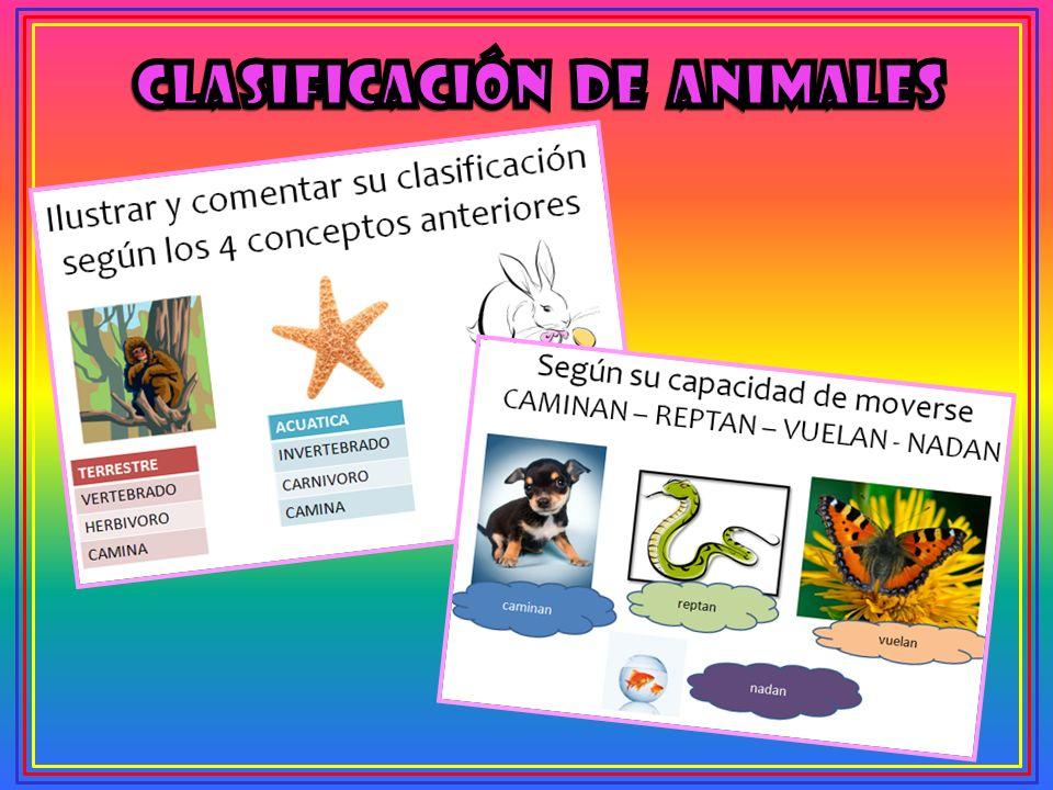 CLASIFICACIÓN DE ANIMALES