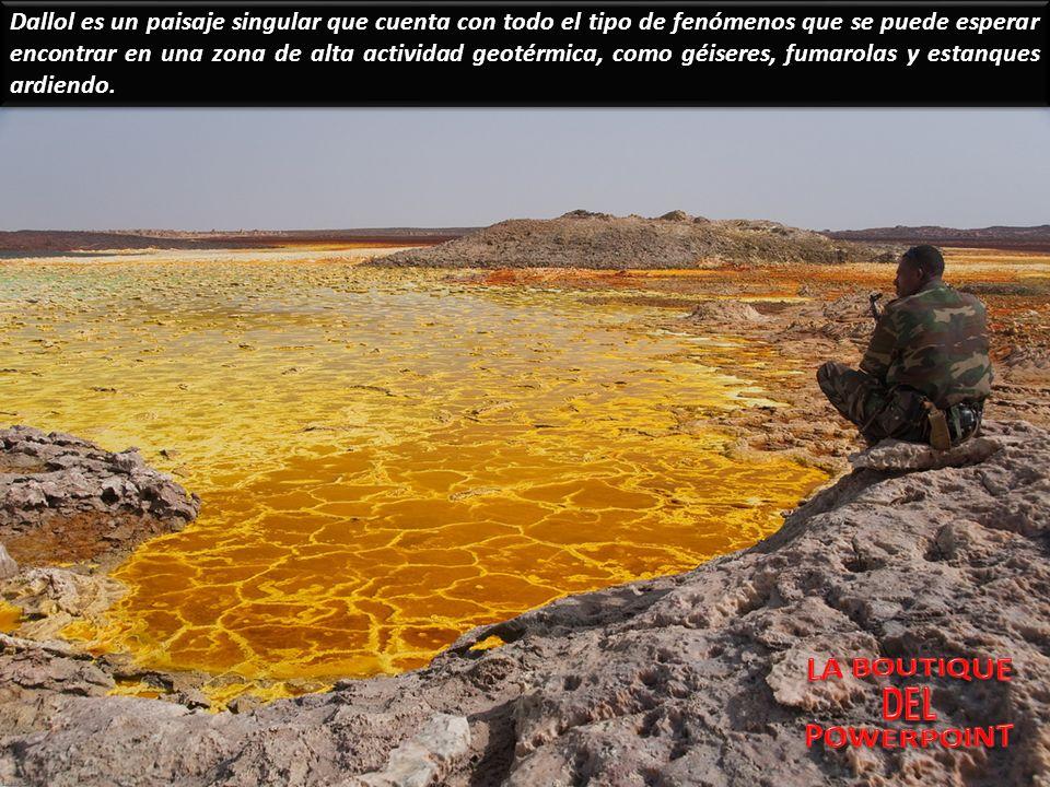 Dallol es un paisaje singular que cuenta con todo el tipo de fenómenos que se puede esperar encontrar en una zona de alta actividad geotérmica, como géiseres, fumarolas y estanques ardiendo.