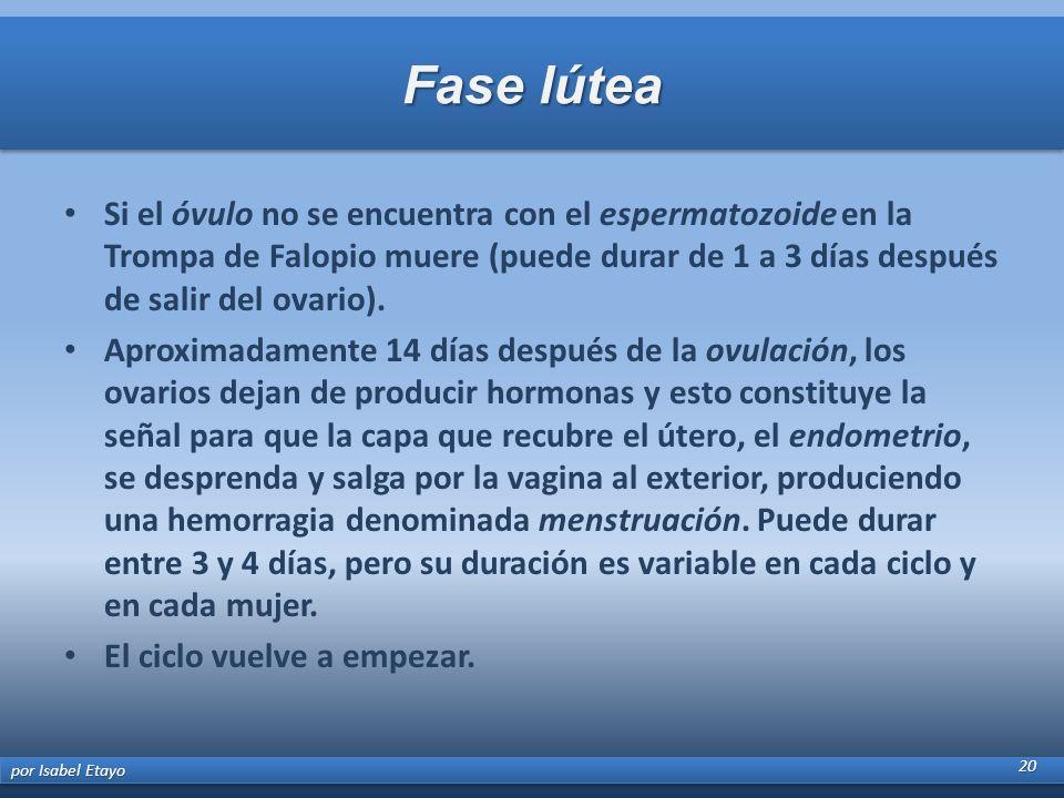 Fase lútea Si el óvulo no se encuentra con el espermatozoide en la Trompa de Falopio muere (puede durar de 1 a 3 días después de salir del ovario).