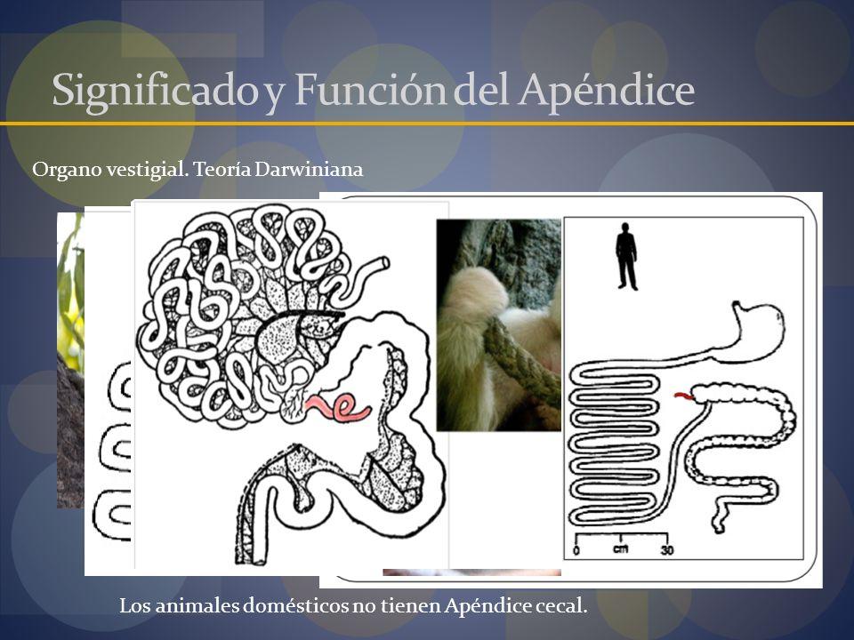 Significado y Función del Apéndice