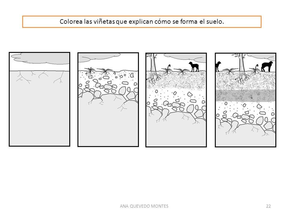 Colorea las viñetas que explican cómo se forma el suelo.