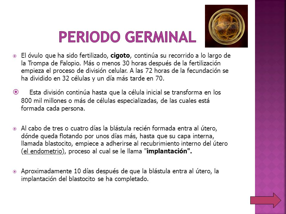 Periodo germinal