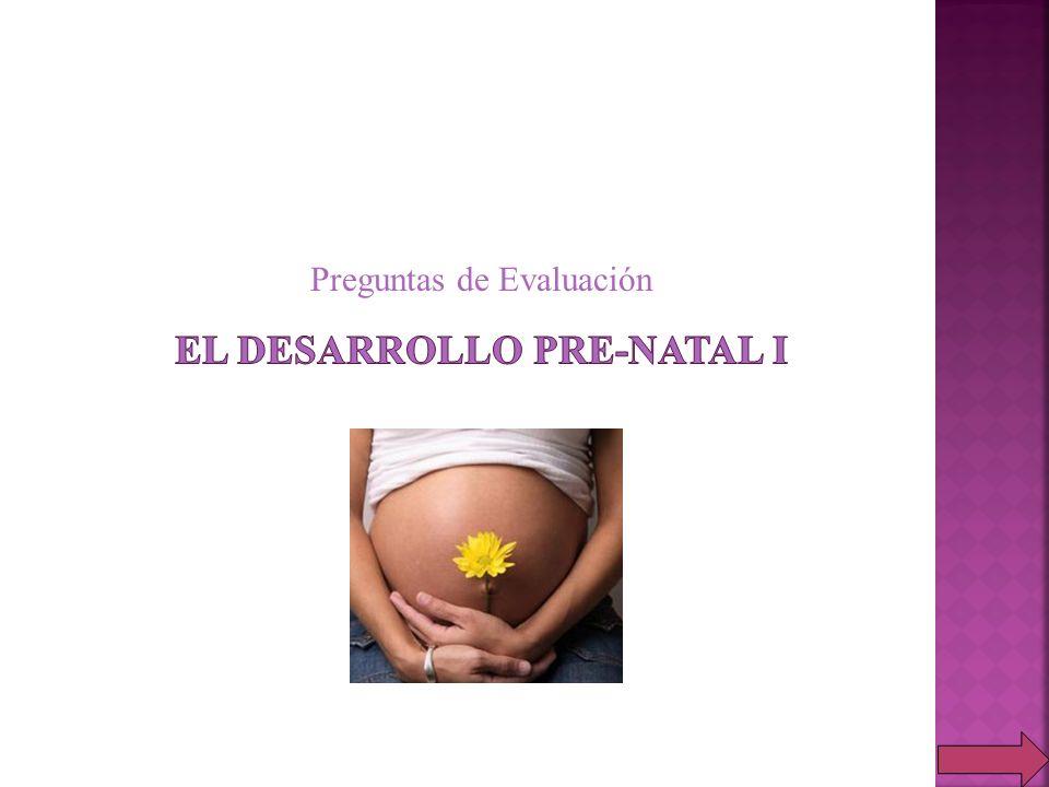 El desarrollo pre-natal i