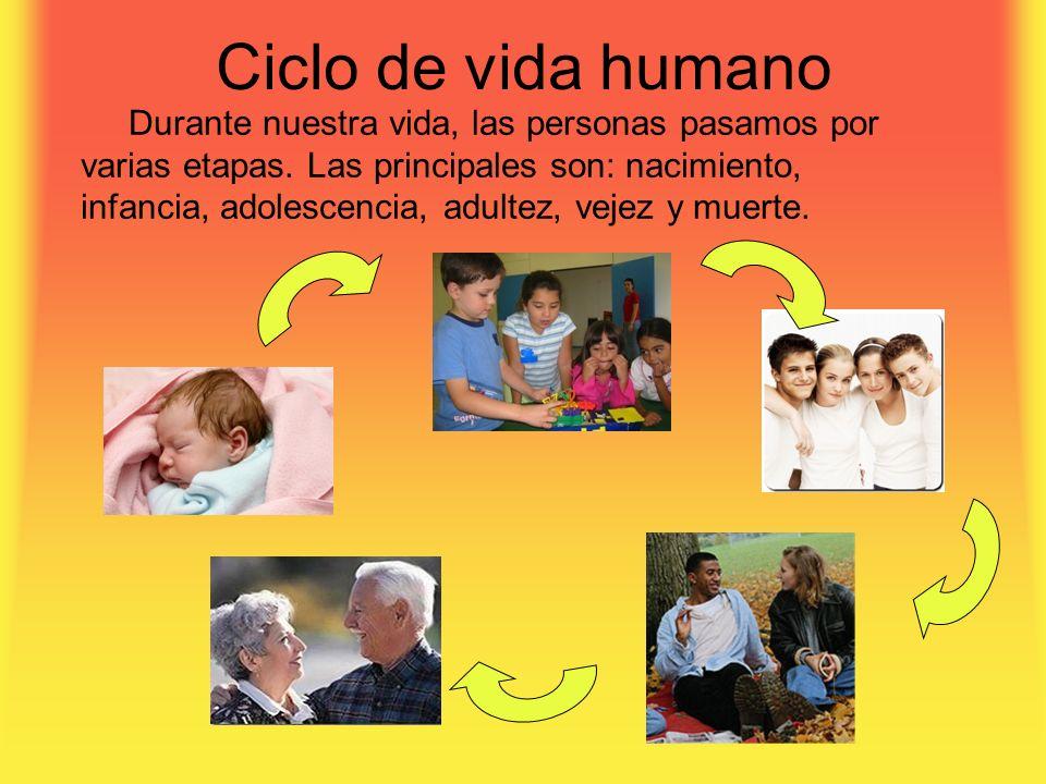 Ciclo de vida humano