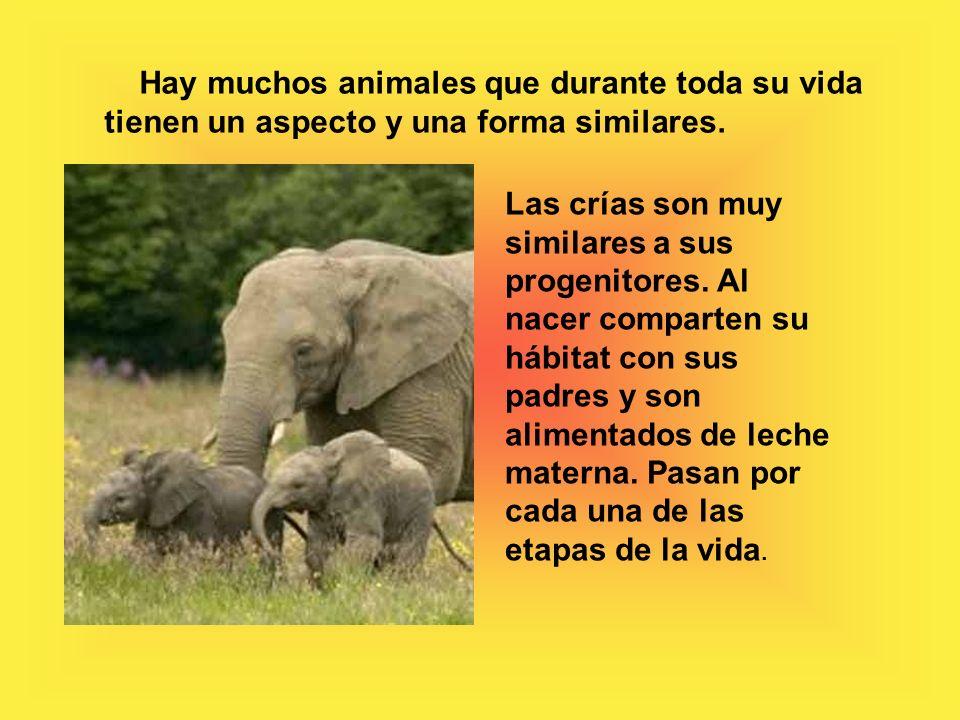 Hay muchos animales que durante toda su vida tienen un aspecto y una forma similares.