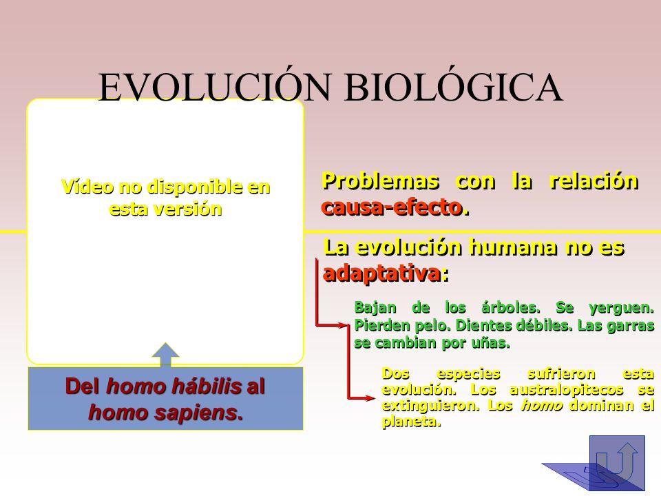 Vídeo no disponible en esta versión Del homo hábilis al homo sapiens.