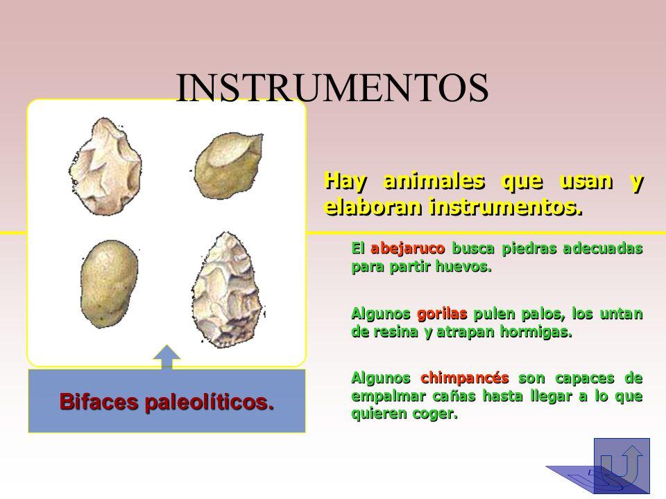 INSTRUMENTOS Hay animales que usan y elaboran instrumentos.
