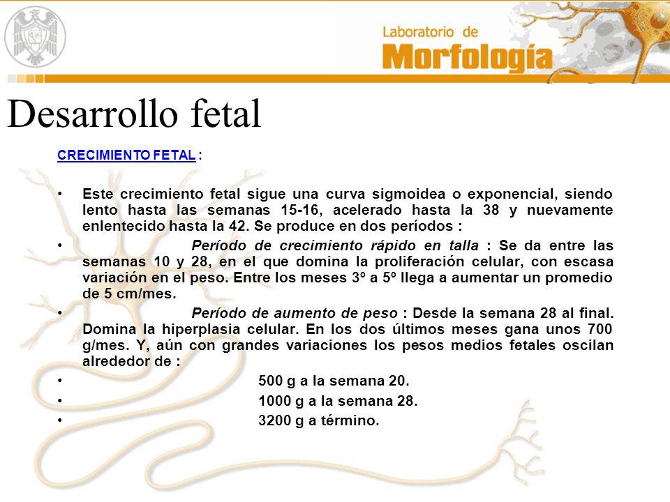 Desarrollo fetal CRECIMIENTO FETAL :