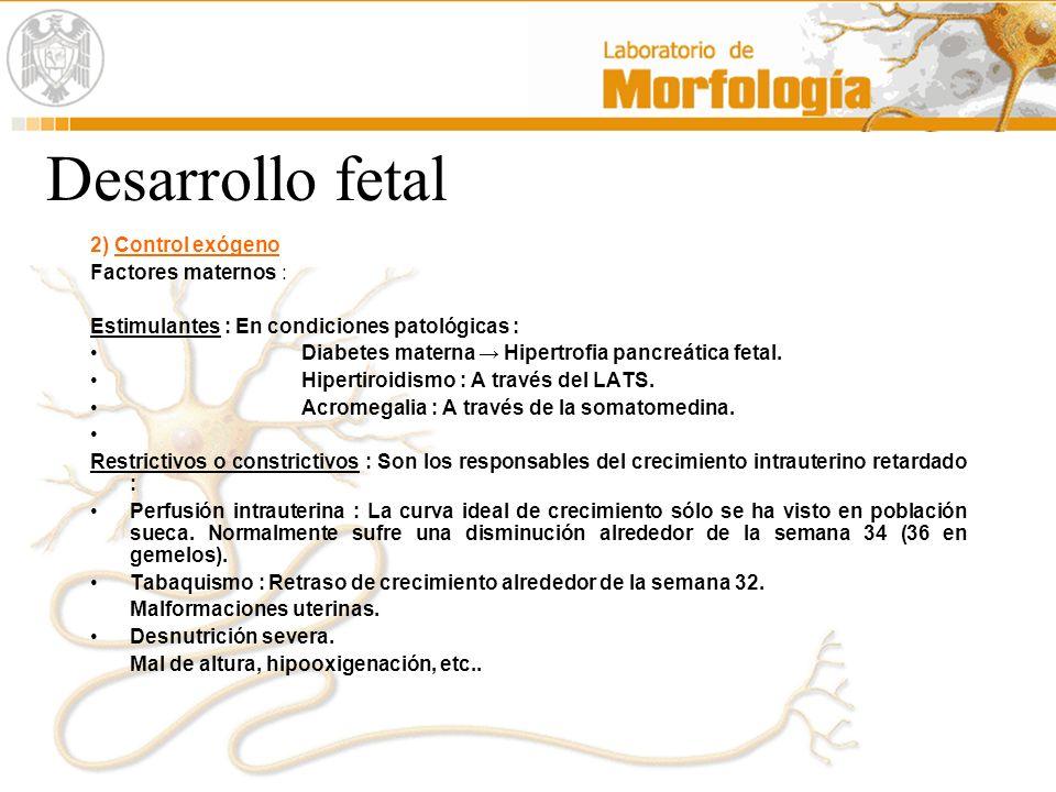 Desarrollo fetal 2) Control exógeno Factores maternos :