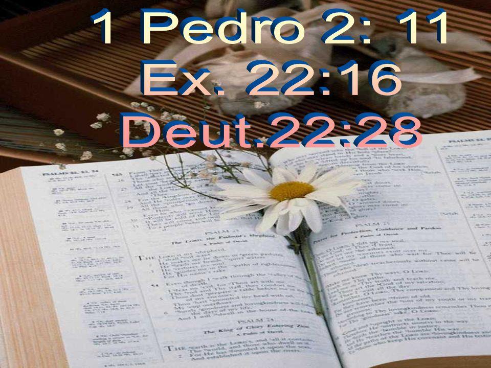 1 Pedro 2: 11 Ex. 22:16 Deut.22:28