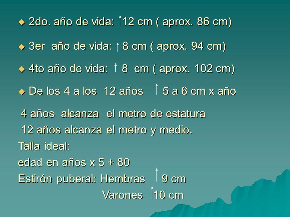 2do. año de vida: 12 cm ( aprox. 86 cm)