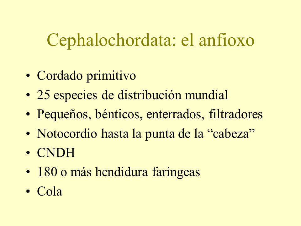 Cephalochordata: el anfioxo
