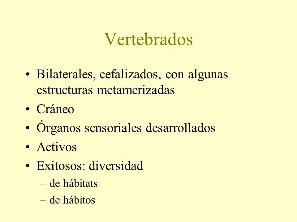 VertebradosBilaterales, cefalizados, con algunas estructuras metamerizadas. Cráneo. Órganos sensoriales desarrollados.