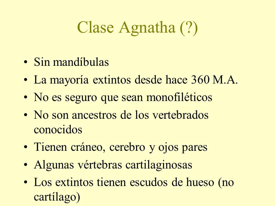 Clase Agnatha ( ) Sin mandíbulas