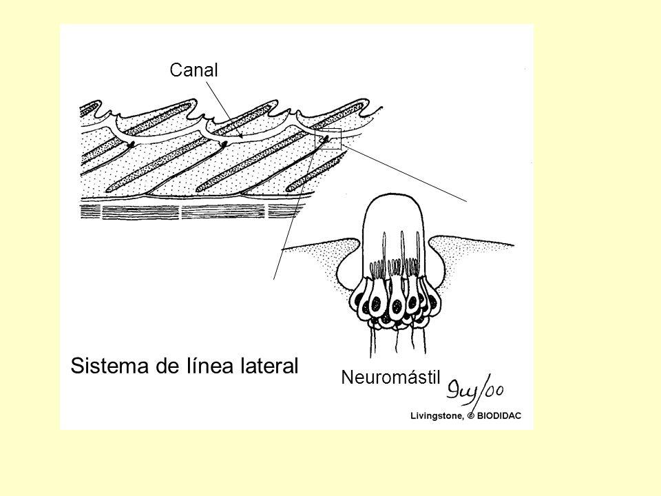Sistema de línea lateral