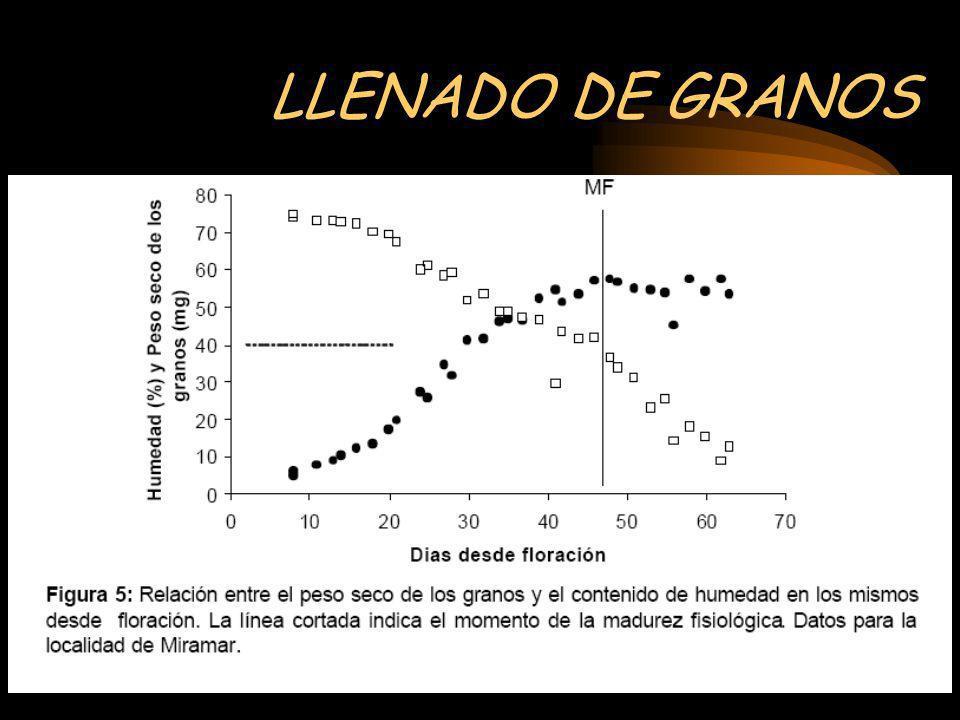 LLENADO DE GRANOS