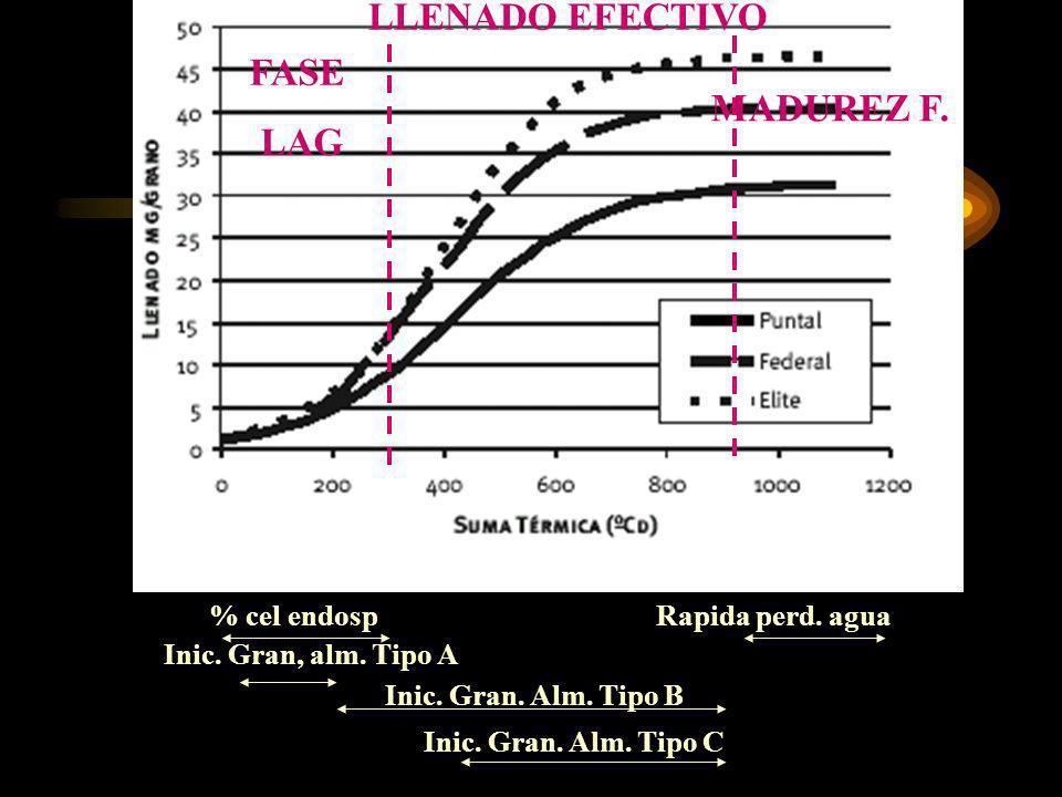 LLENADO EFECTIVO FASE LAG MADUREZ F.