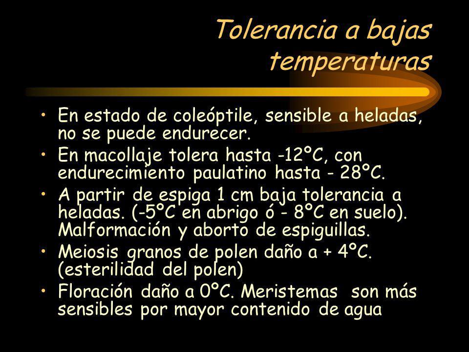 Tolerancia a bajas temperaturas