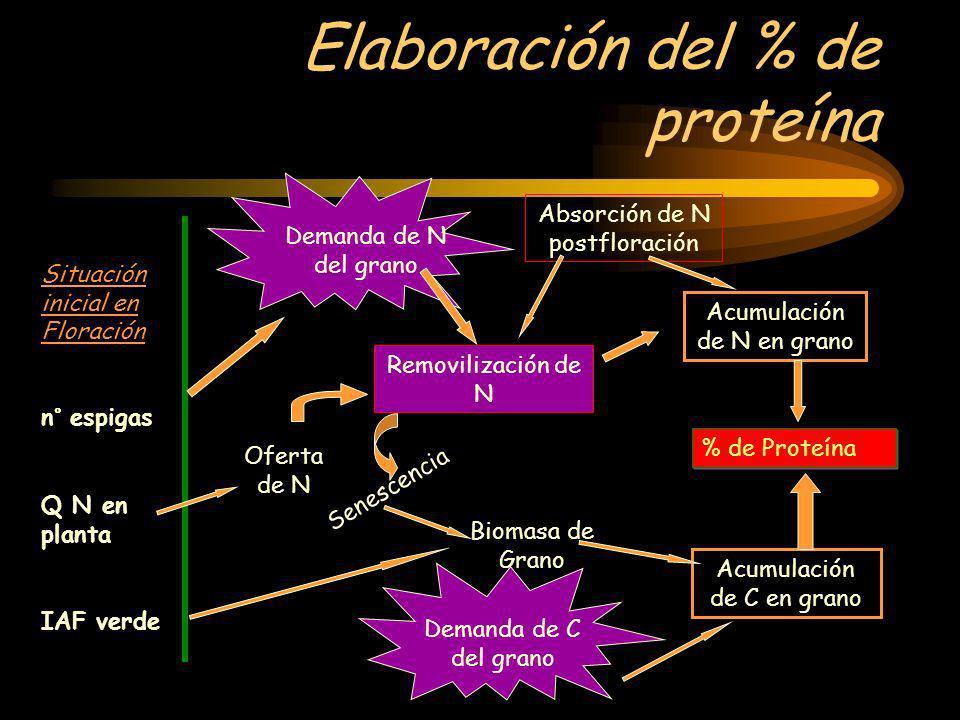 Elaboración del % de proteína