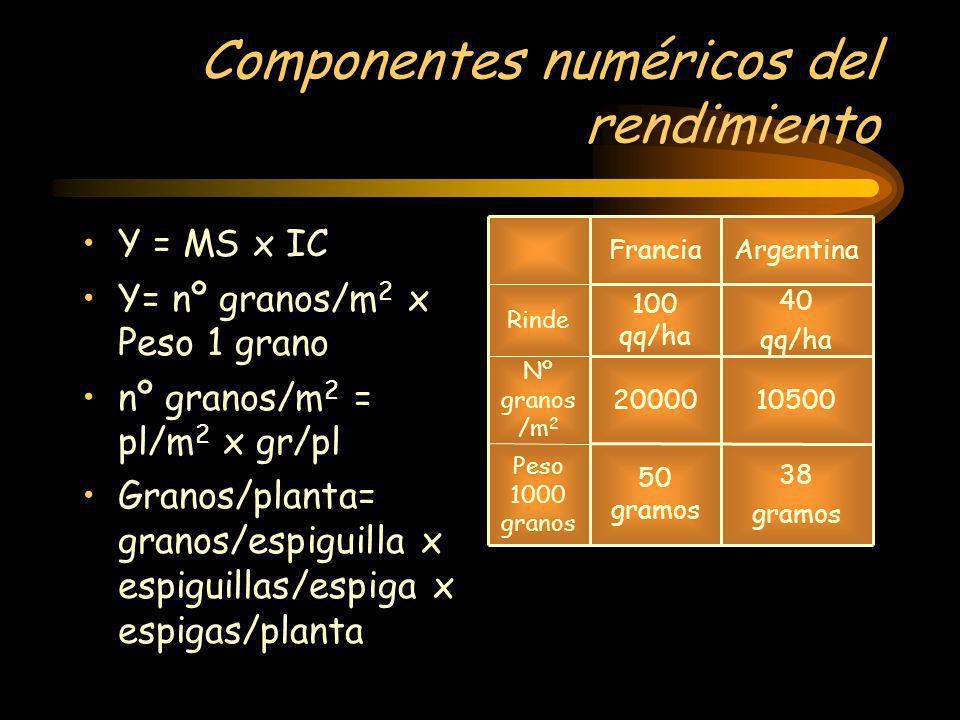 Componentes numéricos del rendimiento