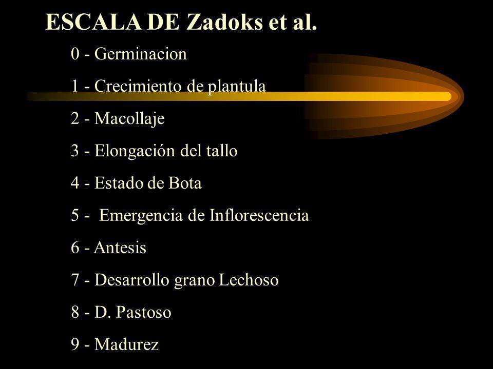 ESCALA DE Zadoks et al. 0 - Germinacion 1 - Crecimiento de plantula