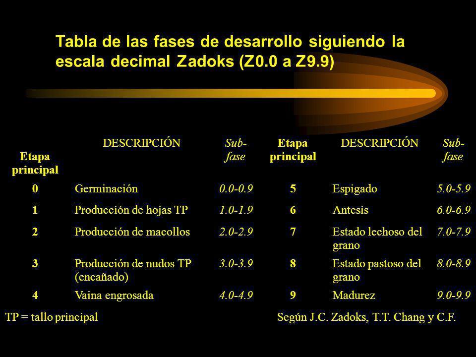 Según J.C. Zadoks, T.T. Chang y C.F.
