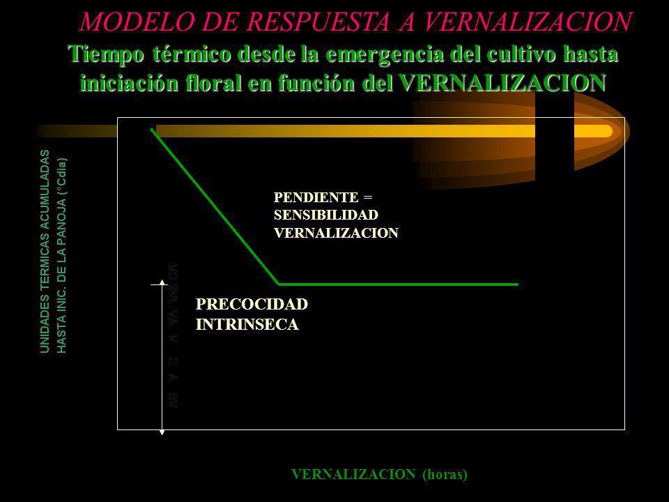 MODELO DE RESPUESTA A VERNALIZACION