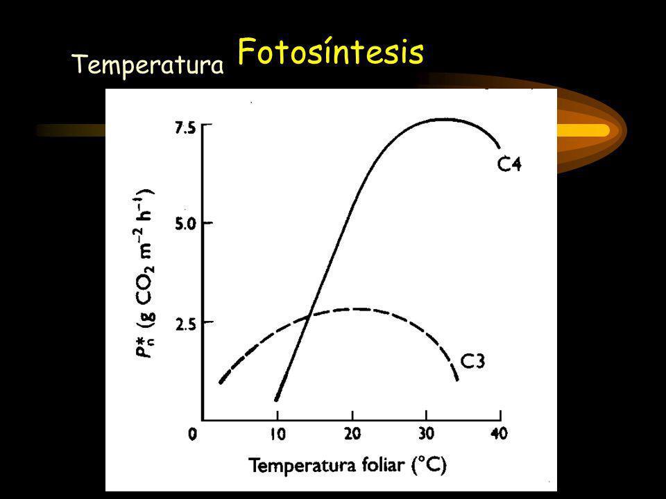 Fotosíntesis Temperatura