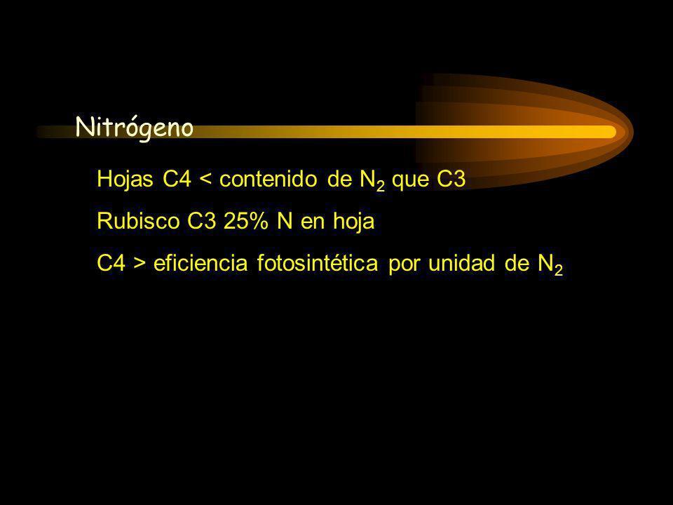 Fotosíntesis Nitrógeno Hojas C4 < contenido de N2 que C3