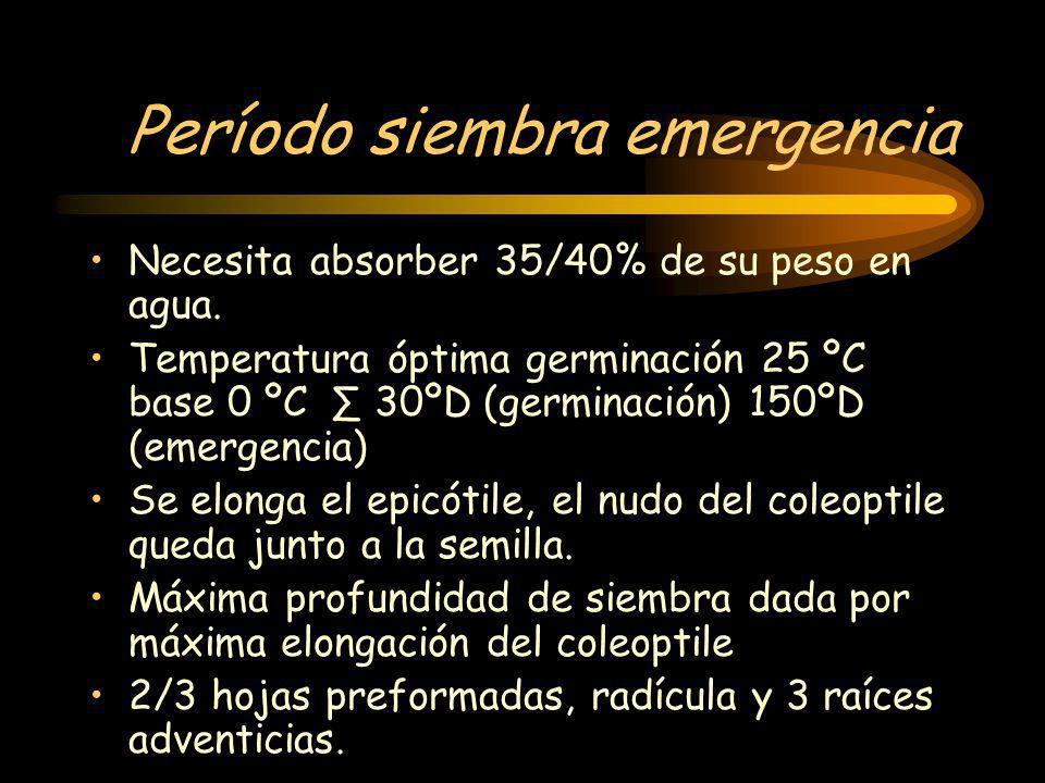 Período siembra emergencia