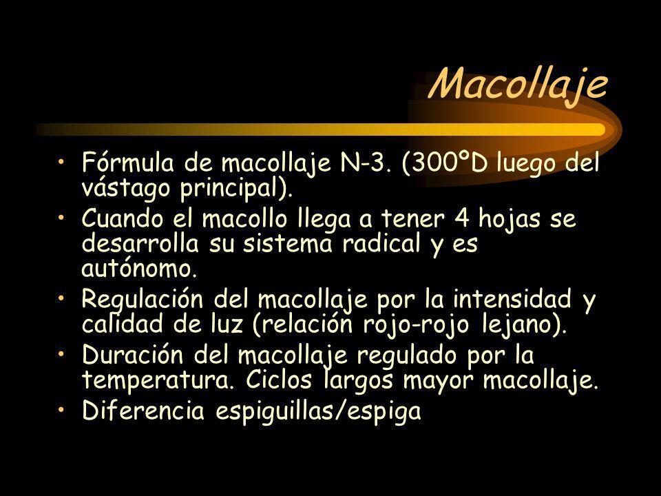 Macollaje Fórmula de macollaje N-3. (300ºD luego del vástago principal).