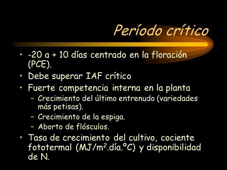 Período crítico -20 a + 10 días centrado en la floración (PCE).