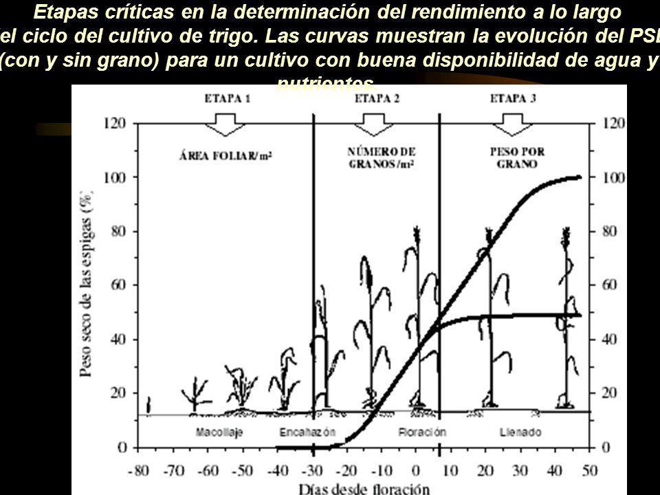 Etapas críticas en la determinación del rendimiento a lo largo