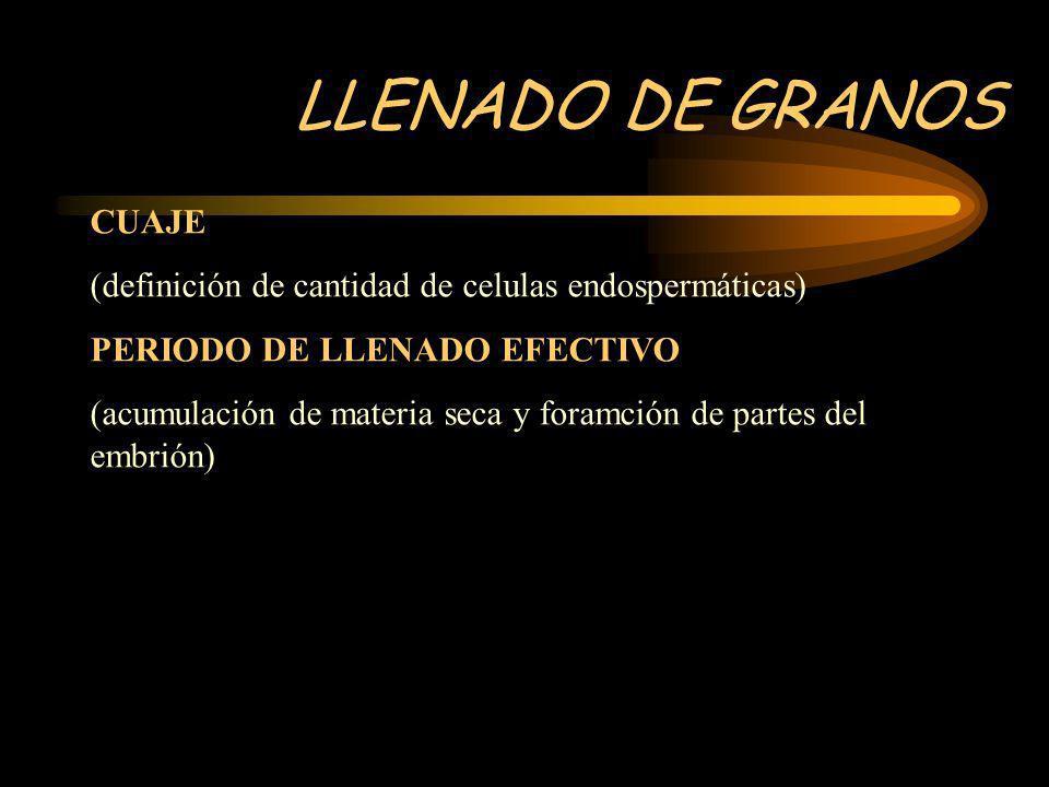 LLENADO DE GRANOS CUAJE