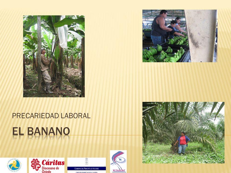 PRECARIEDAD LABORAL EL BANANO