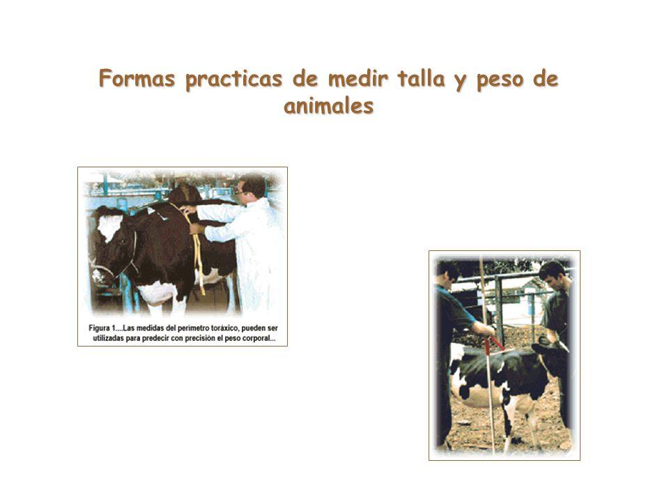 Formas practicas de medir talla y peso de animales