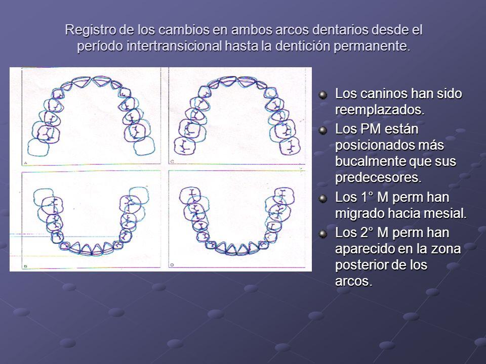 Registro de los cambios en ambos arcos dentarios desde el período intertransicional hasta la dentición permanente.