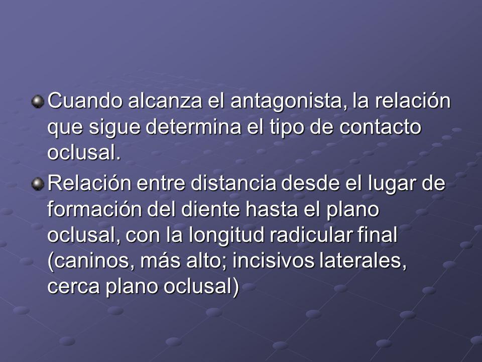 Cuando alcanza el antagonista, la relación que sigue determina el tipo de contacto oclusal.