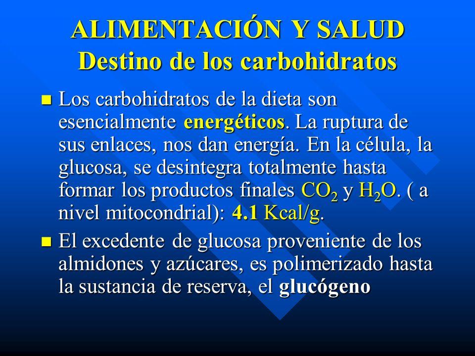 ALIMENTACIÓN Y SALUD Destino de los carbohidratos