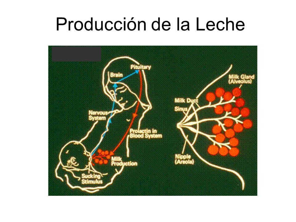 Producción de la Leche