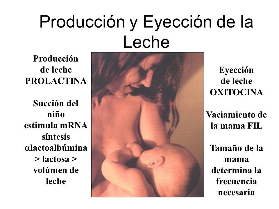Producción y Eyección de la Leche