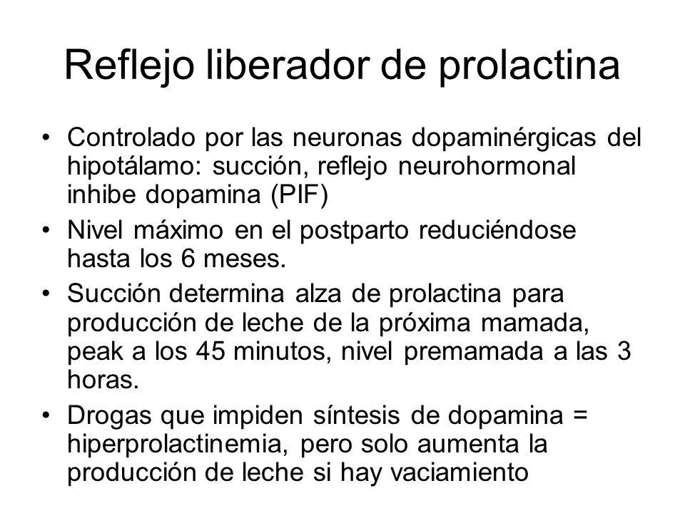 Reflejo liberador de prolactina