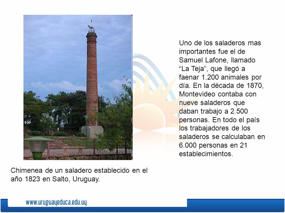 Uno de los saladeros mas importantes fue el de Samuel Lafone, llamado La Teja , que llegó a faenar 1.200 animales por día. En la década de 1870, Montevideo contaba con nueve saladeros que daban trabajo a 2.500 personas. En todo el país los trabajadores de los saladeros se calculaban en 6.000 personas en 21 establecimientos.
