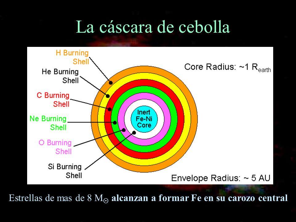 La cáscara de cebolla Estrellas de mas de 8 M alcanzan a formar Fe en su carozo central