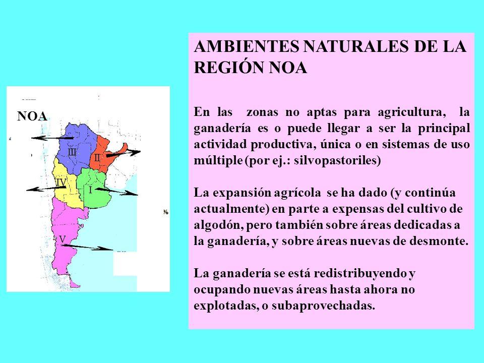 AMBIENTES NATURALES DE LA REGIÓN NOA