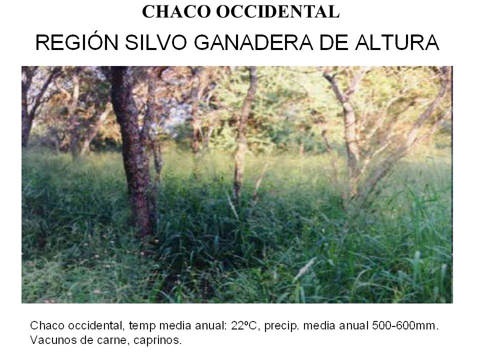 CHACO OCCIDENTAL