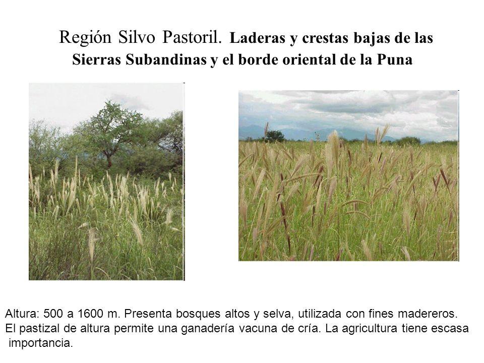 Región Silvo Pastoril. Laderas y crestas bajas de las Sierras Subandinas y el borde oriental de la Puna