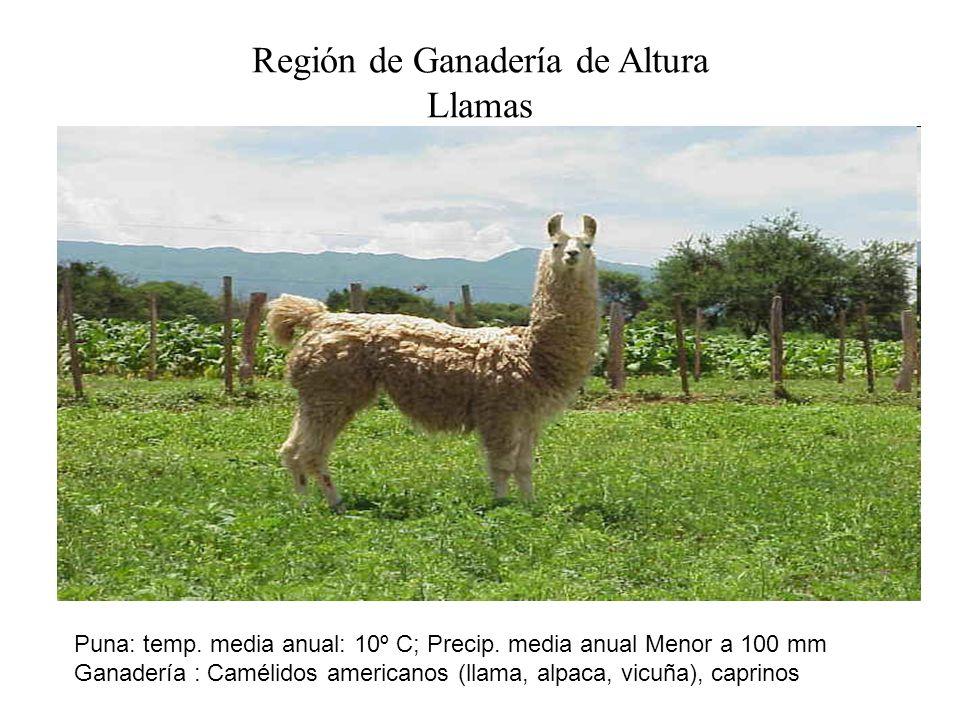 Región de Ganadería de Altura Llamas