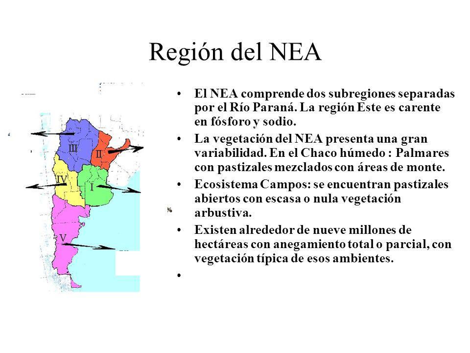Región del NEA El NEA comprende dos subregiones separadas por el Río Paraná. La región Este es carente en fósforo y sodio.
