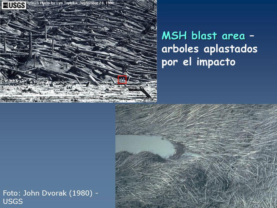 MSH blast area – arboles aplastados por el impacto